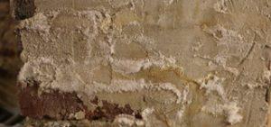 Humidité Ascensionnelle ou Mérule - Dromursec - Image Sels